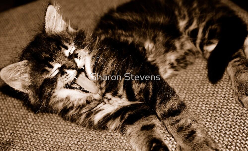 Laughing Kitten by Sharon Stevens