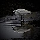 REFLECTING ON THE SHADOW OF YOUR OWN EGRETS...  by NICK COBURN PHILLIPS