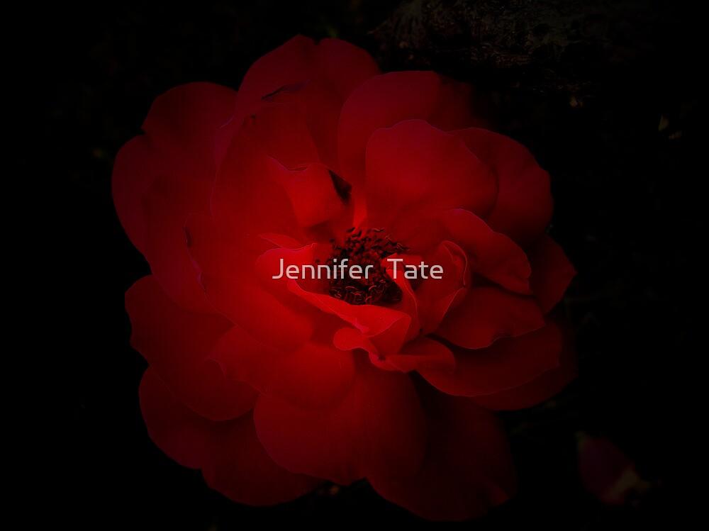 Red Rose by Jennifer  Tate