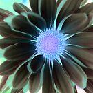 Purple Haze by Terri~Lynn Bealle