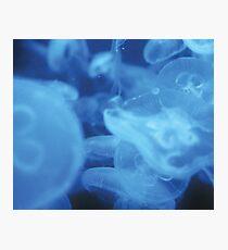 Blue Jellyfish Photographic Print