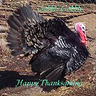 Gobby,Thanksgiving Card by MaeBelle