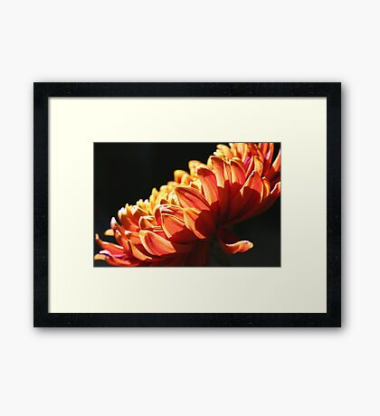 Let the Sun Shine Down on You! Framed Print