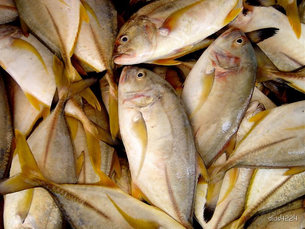 A Bit Fishy by dids4224