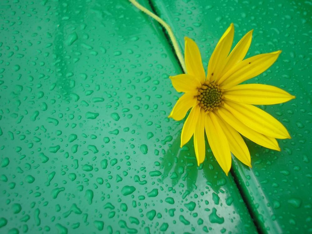 Bench Flower by Ryan Sollinger