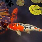 Japanese Koi by Larry Costales