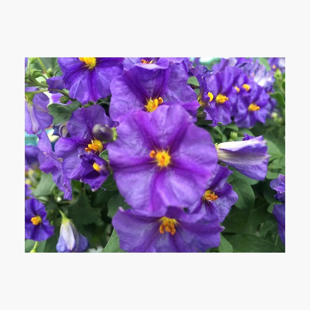 dise/ño Floral Fany Color Azul y Rosa Este es un Corte de un Rollo 18 mm, 3 m Cinta al bies
