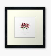 Flor de pascua Lámina enmarcada