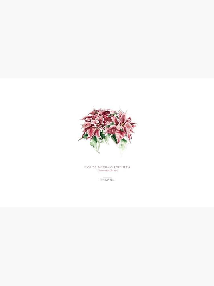 Flor de pascua de konsulandia