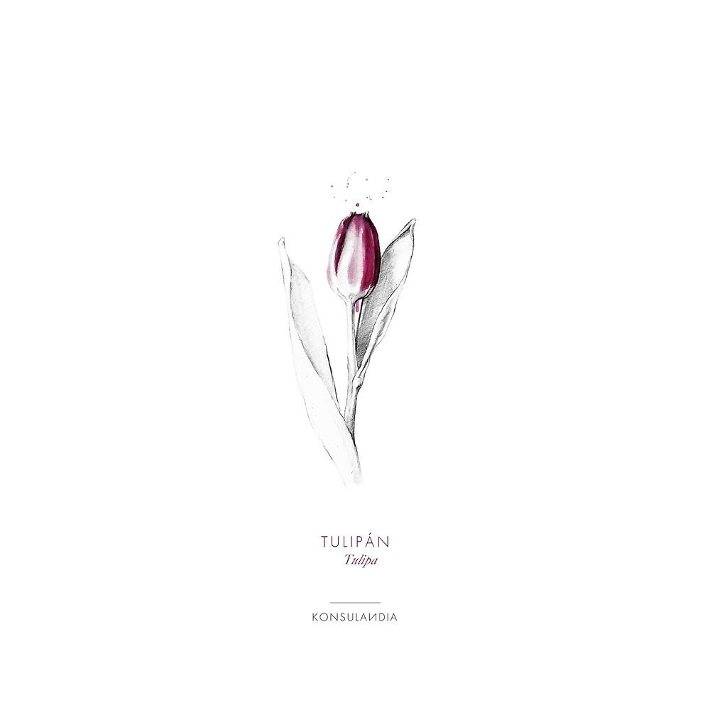 «Tulipan» de konsulandia