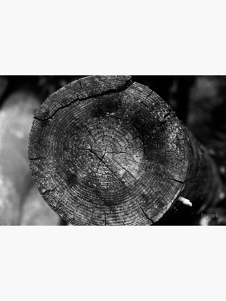Wood by hynek