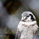 Owl by Bumchkin