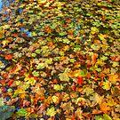 Fallen Leaves by LizzieMorrison