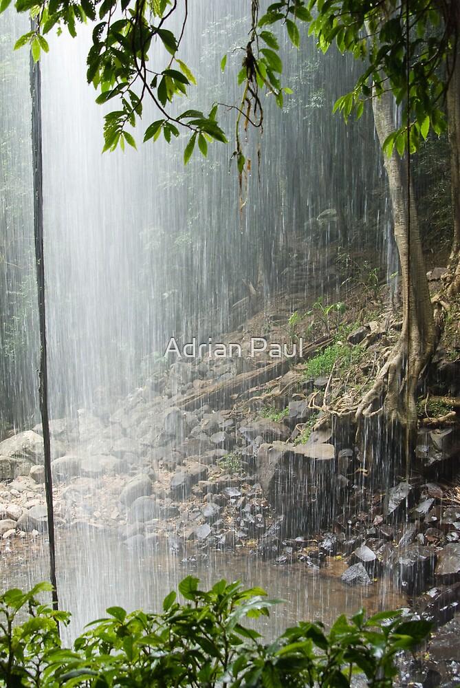 Crystal Shower Falls, Dorrigo National Park, NSW, Australia by Adrian Paul