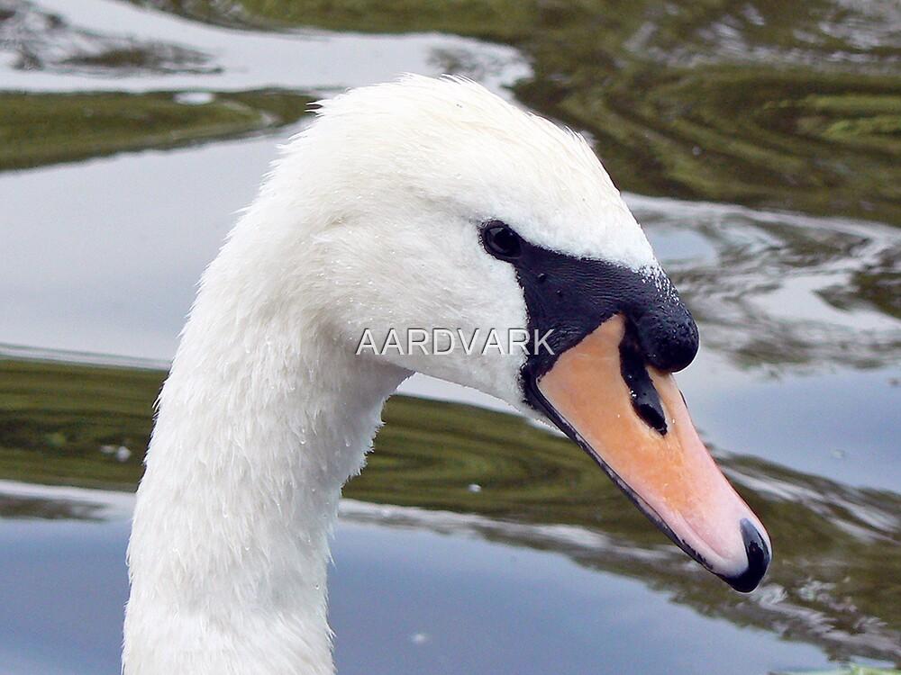 A Mute Swan by AARDVARK