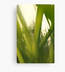 Grass abstract 1 Canvas Print