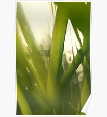 Grass abstract 1 Poster