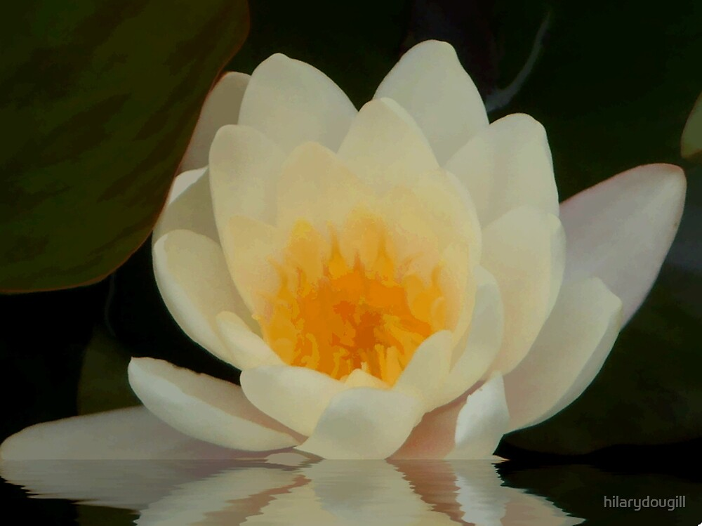 abstractof waterlily by hilarydougill