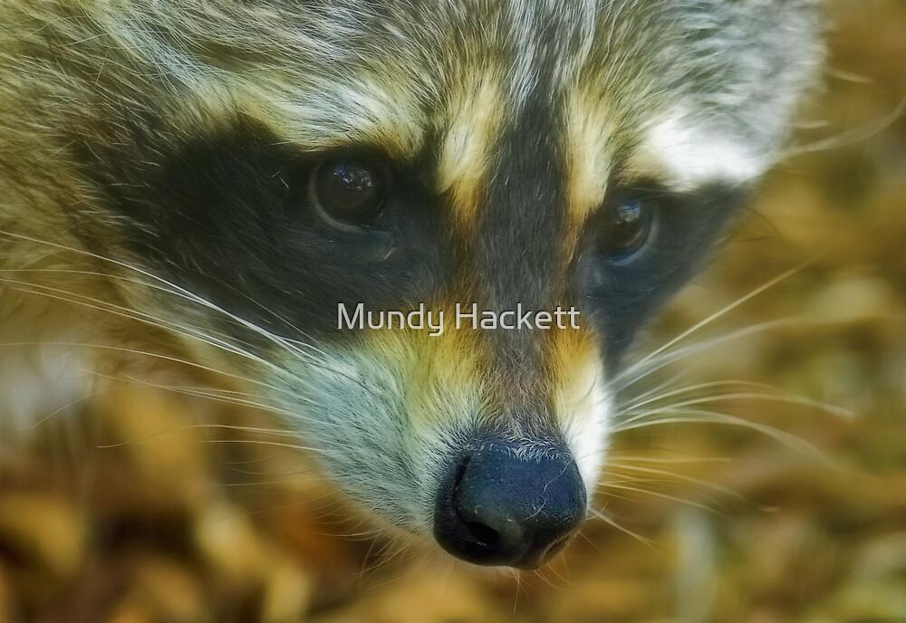 Raccoon by Mundy Hackett