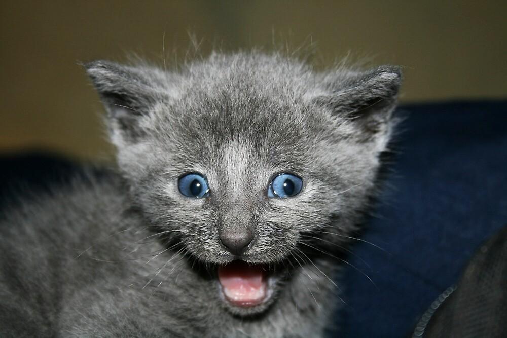 Cheese !!!  Good Kitty :) by Nix76