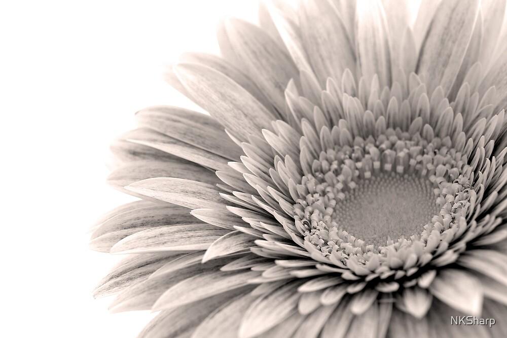 Sepia toned Gerbera flower by NKSharp