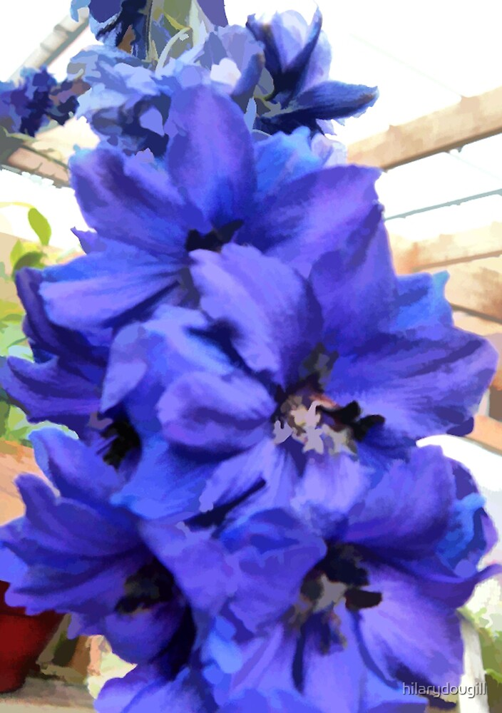 abstract of Delphinium by hilarydougill