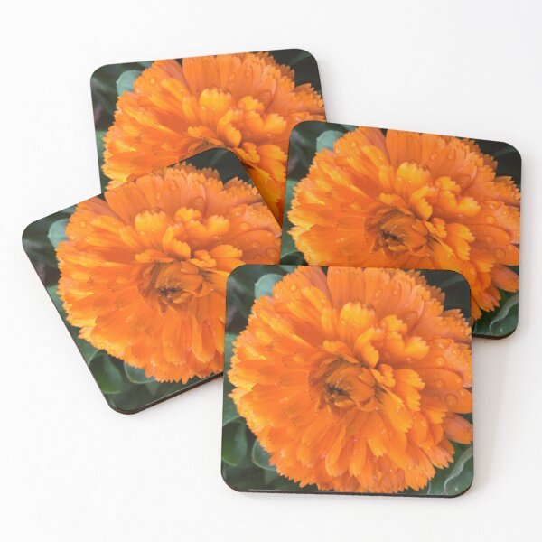 Marigold with Raindrops Coasters (Set of 4)