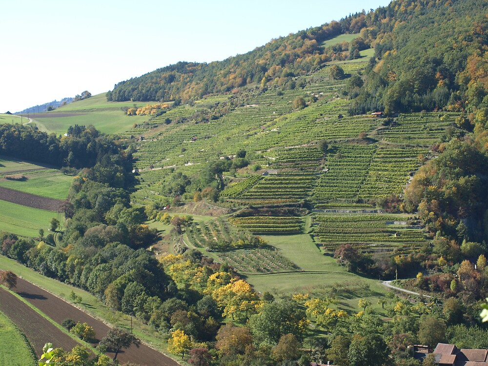 vineyards on the trenning by hkerzendorfer