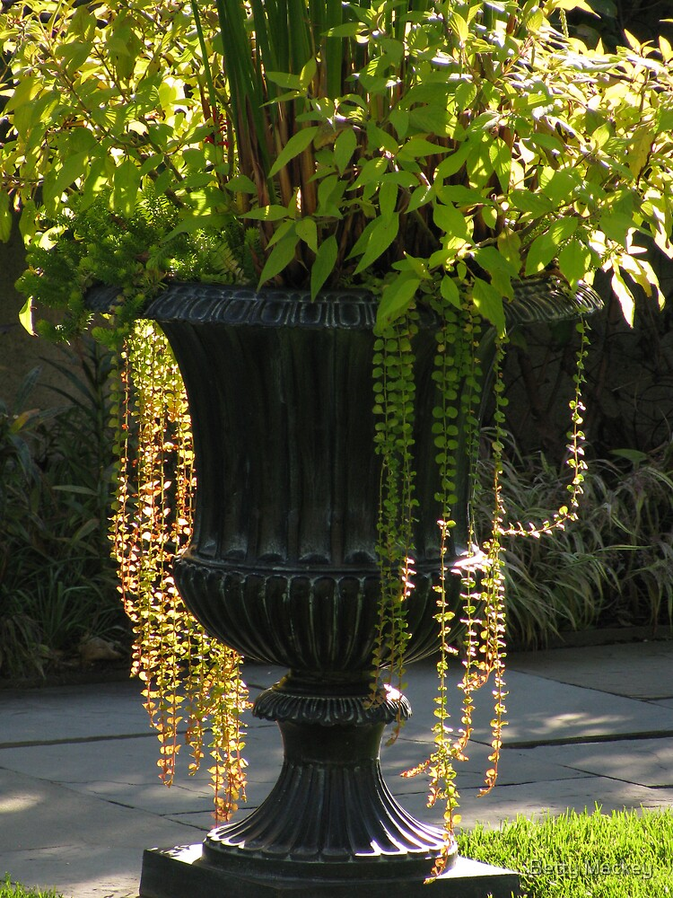 Sunlit Urn by Betty Mackey