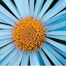 Blue chamomile by Yana Art