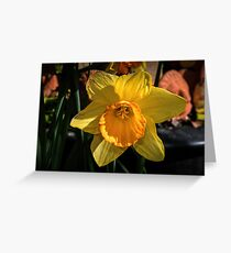 Daffodil Leith Park Victoria 20170823 1079  Greeting Card