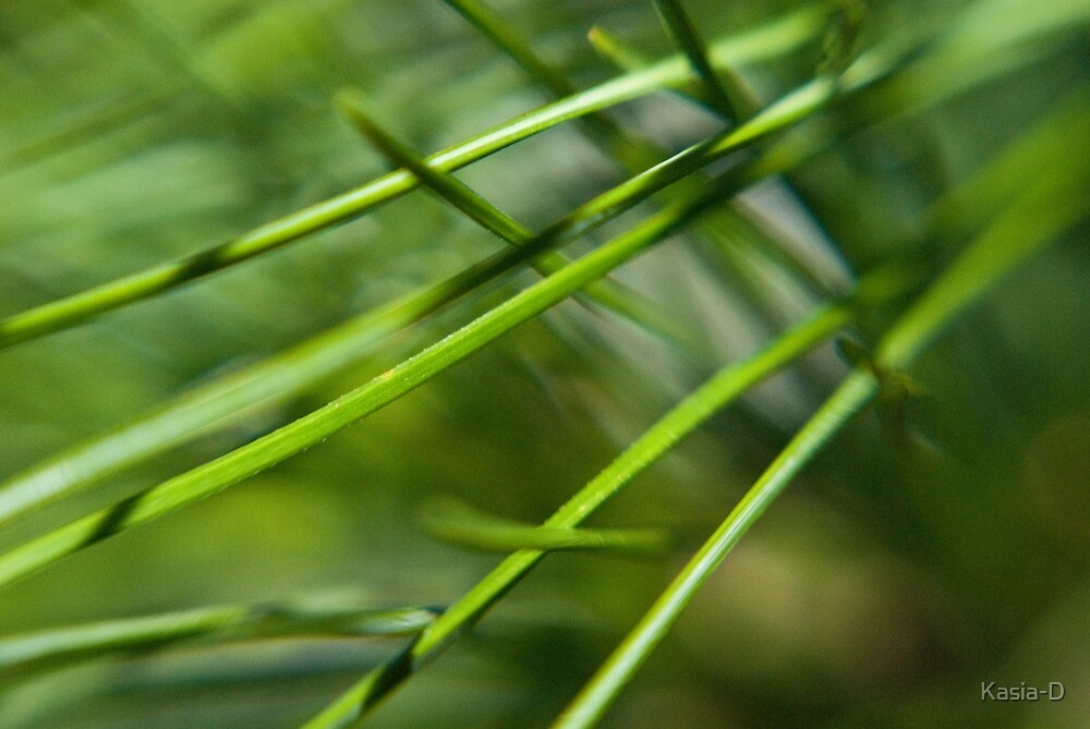 Green Needles by Kasia-D