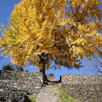 The Ginkgo Tree by patmonty