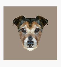 The Jack Russell Photographic Print