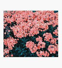 Lollipop Flowers Photographic Print