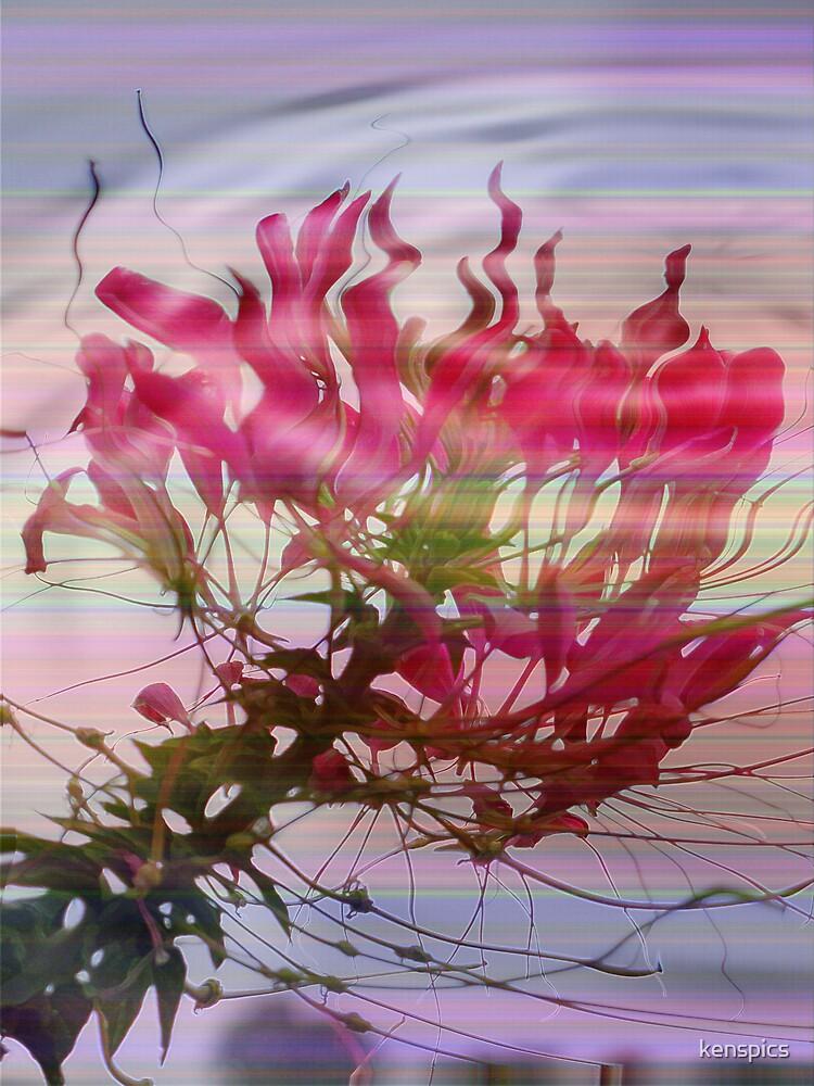 Rainbow Flower by kenspics
