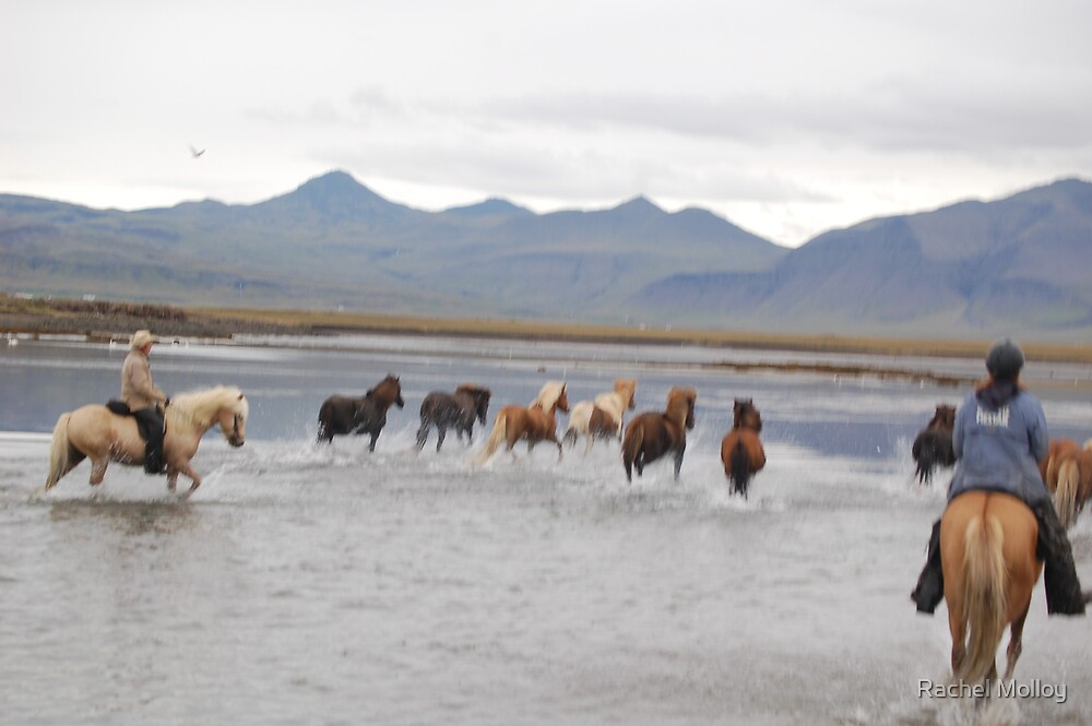 Ice Horses by Rachel Molloy