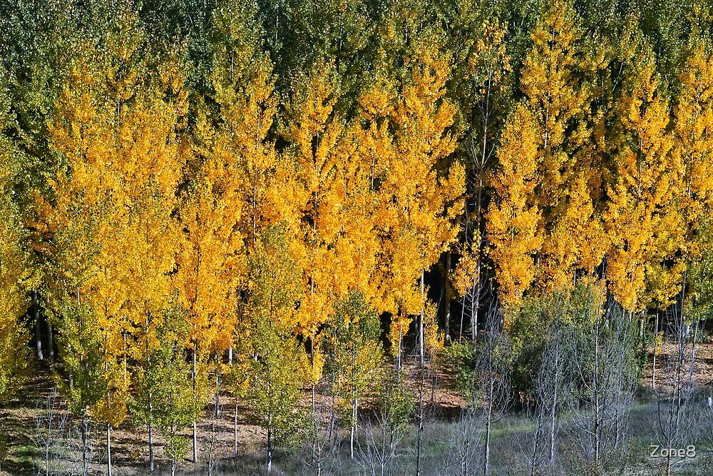 Autumn Trees-0353, near Granada, Spain by Zone8
