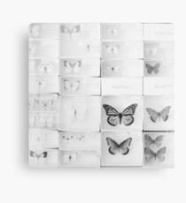 Lepidopterology Canvas Print