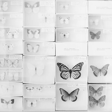 Lepidopterology by riotjane