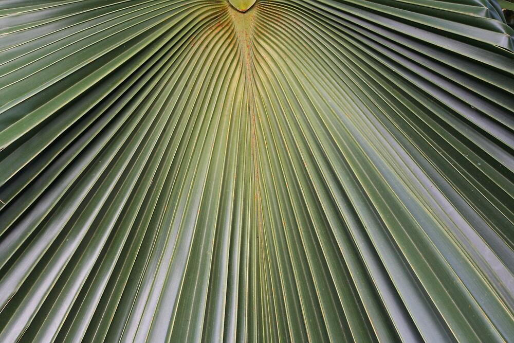 Palm Fan by noffi