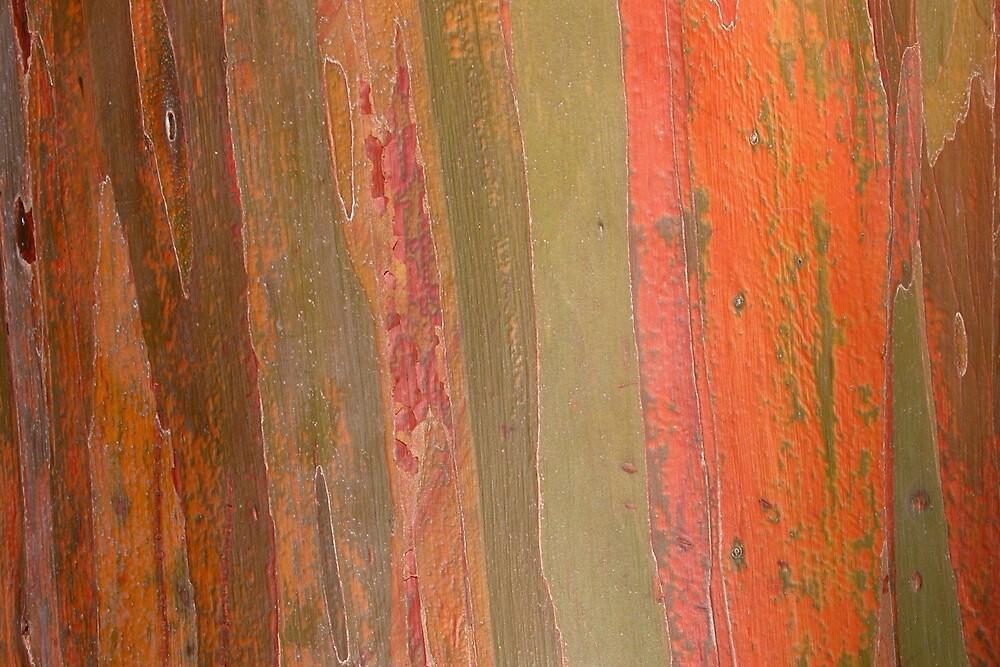 Rainbow Eucalyptus Bark by noffi