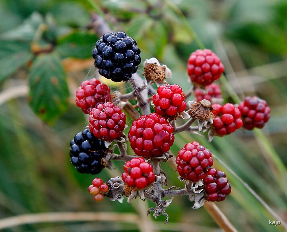 Autumn Blackberries by kajo
