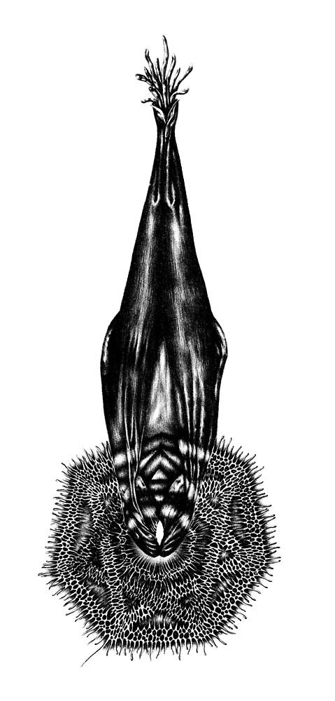 The Sacred Whale  by Tara Haghighi