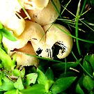 A Tiny Cluster of Mushrooms by Maureen Kay