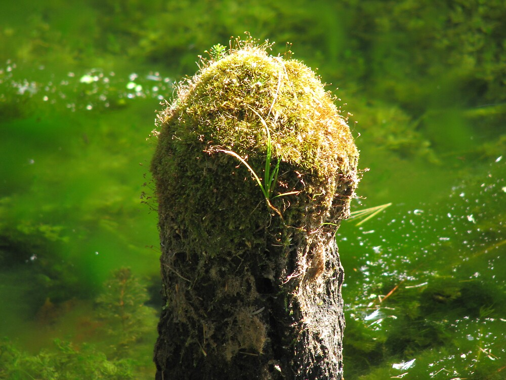 Moss on a Stump by JohnEvans