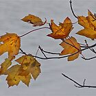 The Essence of Fall by John Butler