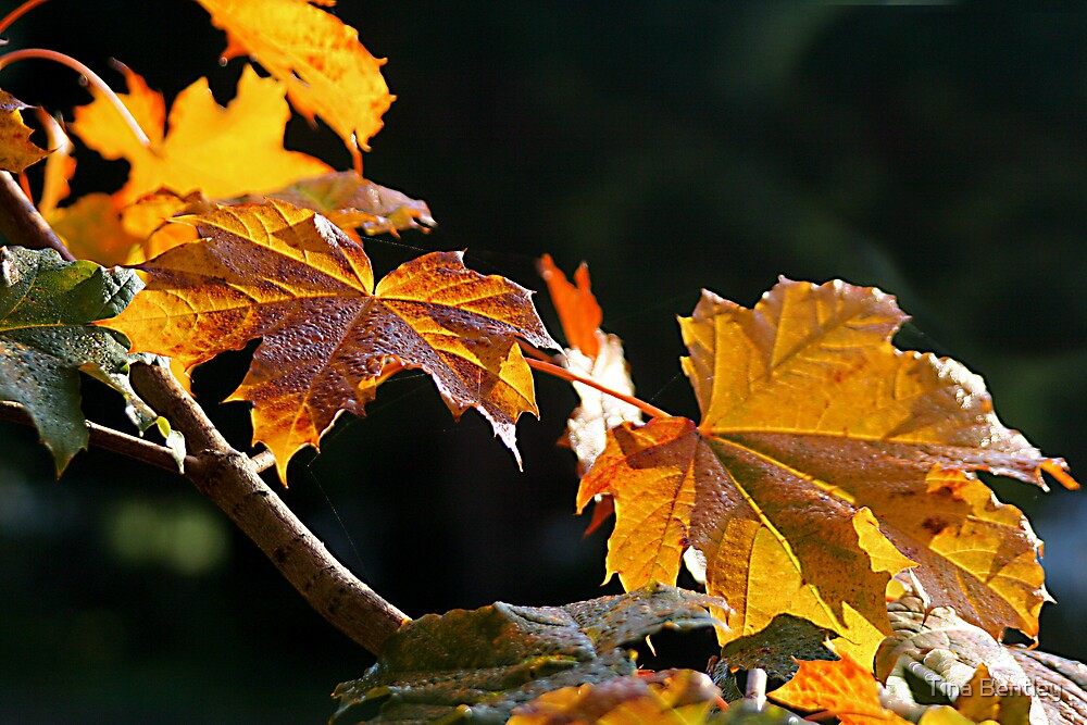 Colors of Fall by Tina Bentley