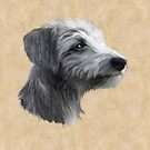 Rough Coated Lurcher by John Edwards