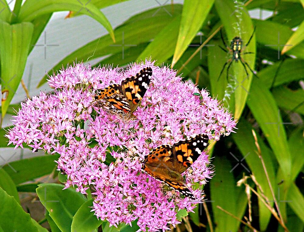 Butterfly buffet  by Tina Bentley